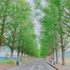 緑の癒しパート1
