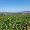 フランス「ワイン街道の真珠」アルザスの美しい村々をめぐる1日ツアー