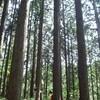 金時山登山とキャンプ(その2)