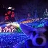❝いちはらクオードの森(イルミネーション)❞   愛犬とおでかけ-千葉県観光🎵 2020年12月19日