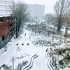 すっかり雪のモントリオール