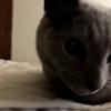 【猫さんと暮らす】ステーホームと猫さん【猫変態夫婦】