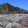 高尾でお散歩! 高尾梅郷で梅を見てきました!!