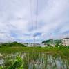 獅子ヶ谷池(神奈川県横浜)
