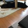 お疲れサン(_´Д`)ノ~~オツカレー