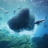 「東北の海」が身近になる、「仙台うみの杜水族館」その1