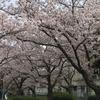日本の美徳って難しい