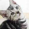 保護猫にコクシジウムが出たら「はあぁぁ~」とため息が出る理由