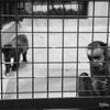 神戸市立王子動物園と俺。【関西三セット旅行(part16)兵庫】