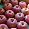 リンゴ、リンゴの保存方法を調べてみた