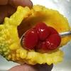 熟れて黄色くなったゴーヤをデザートとして食べる