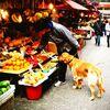 【香港の路上市場】(4)犬と一緒に行ける果物屋さん