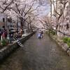 桜の見頃は四日後(?)