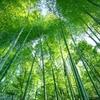 竹害対策に飾り竹炭を買ってたら貢献してた。
