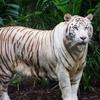 SINタッチじゃないよ!【シンガポール旅行⑥】シンガポール動物園 割引チケット/回り方のコツ