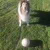 【人見知り必見】 犬と遊んでいたら、哲学的な話になっていた。