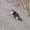 見つめる猫と逃げる猫。