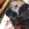 youtuber 甲斐犬サンのデビュー❤︎の巻〜ガンバッテイキマ━p(●^ヮ^●)q━ショイ!!