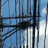電柱にカラスの巣を発見した時どこに連絡すればいいのか