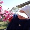 南国の冬 1月中旬からお花イベントが続きます