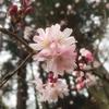 大阪府河内長野市にある【大阪府立 花の文化園】に行って来た!