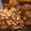 原木舞茸、天然なめこ、きのこの季節です☆☆神戸三宮の和食は安東へ