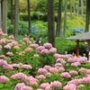 西国十番札所「三室戸寺」紫陽花