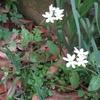 白い花の咲くころ