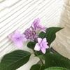 花壇の手入れをしていると他の家の花壇が気になっていまうの巻