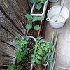男の家庭菜園。