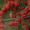 2019年11月2日の鳥撮り-埼玉県