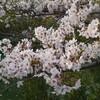 春はうつくし、そしてねむし、
