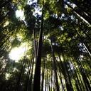 ゆるゆる森のモスグリーン
