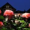 バラの季節到来! 旧古河庭園・春のバラフェスティバル