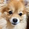 【犬のおやつ】〜おねだり上手なワンコ達〜