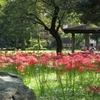 石川東公園にヒガンバナを見に行ってきました