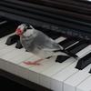 ピアノも警備対象