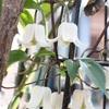 寒い季節に貴重な花々
