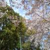 。。blossom。。