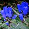 10月21日誕生日の花と花言葉歌句