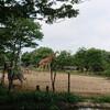 真夏の動物園!