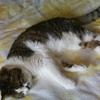 猫は冷房が苦手?