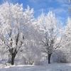 ケンタッキー州に呼ばれた冬-年上男との恋愛と自分らしさ-