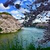 【千鳥ヶ淵】都内で人気のお花見スポット