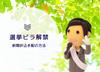 愛知県議会議員選挙2019│選挙ビラ解禁と新聞折込手配について