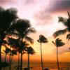 ヒルトン・グランド・バケーションズ販売説明会 なぜ人はハワイに別荘を持つという選択をするのか?