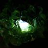 【工作動画】盆景LEDの作り方 ③