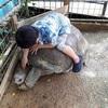 ネオパークオキナワ【沖縄県名護市】で動物とふれあう!