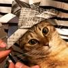 【猫画像】猫に日本の伝統文化である端午の節句を教えてみた