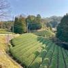 見渡す限りの茶畑! 京都府和束町(30/1741)